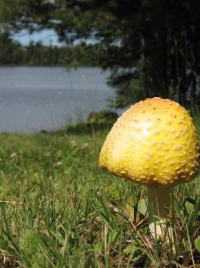 August mushroom