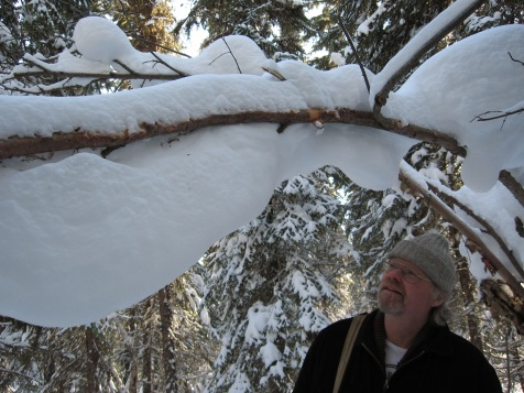 M gazes in amazement at the snow on a branch up the way