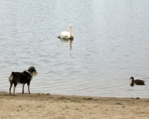 a dog, a duck and a pelican
