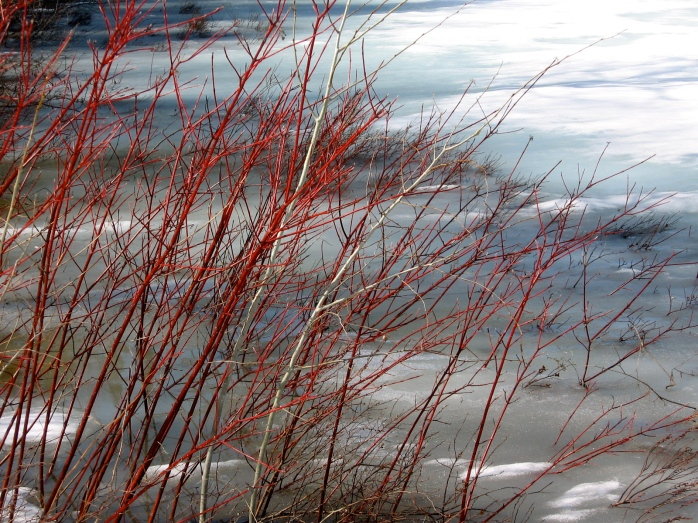 Red...oooh...Red... Ice Going Out last year